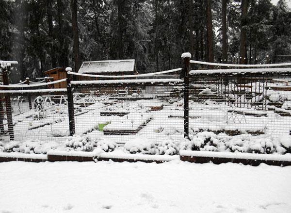 snowfall 1 on gabriola