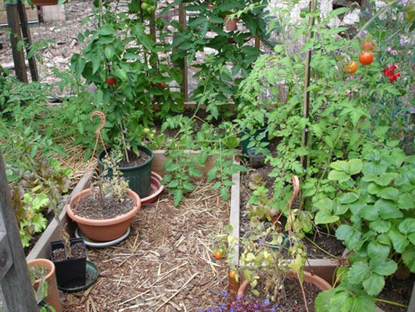 8x8 kitchen garden2 gabriola