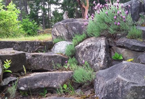 stone steps & otto quast lavender